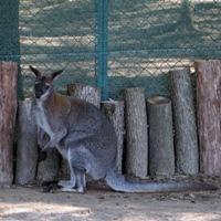 В Новомосковском округе появится зоопарк