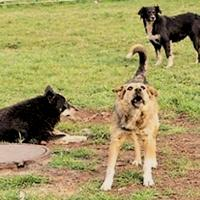 Карантин по бешенству животных объявлен на территории Новомосковского административного округа