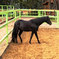 «Мортон» может построить конный парк площадью около 10 га в «новой» Москве к 2017 г.