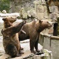 Жилой комплекс с зоопарком в Новомосковском административном округе планируется ввести в конце года